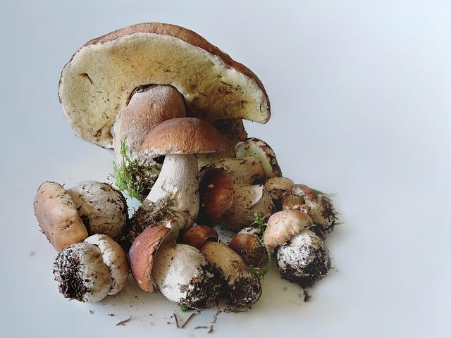 špinavé houby