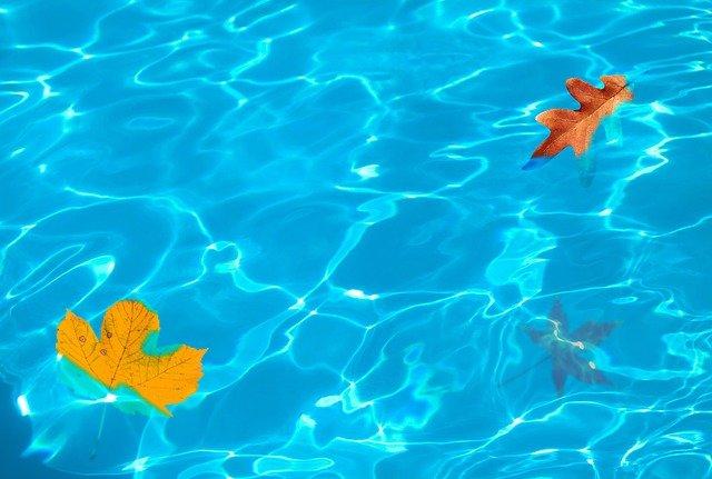 listy ve vodě.jpg